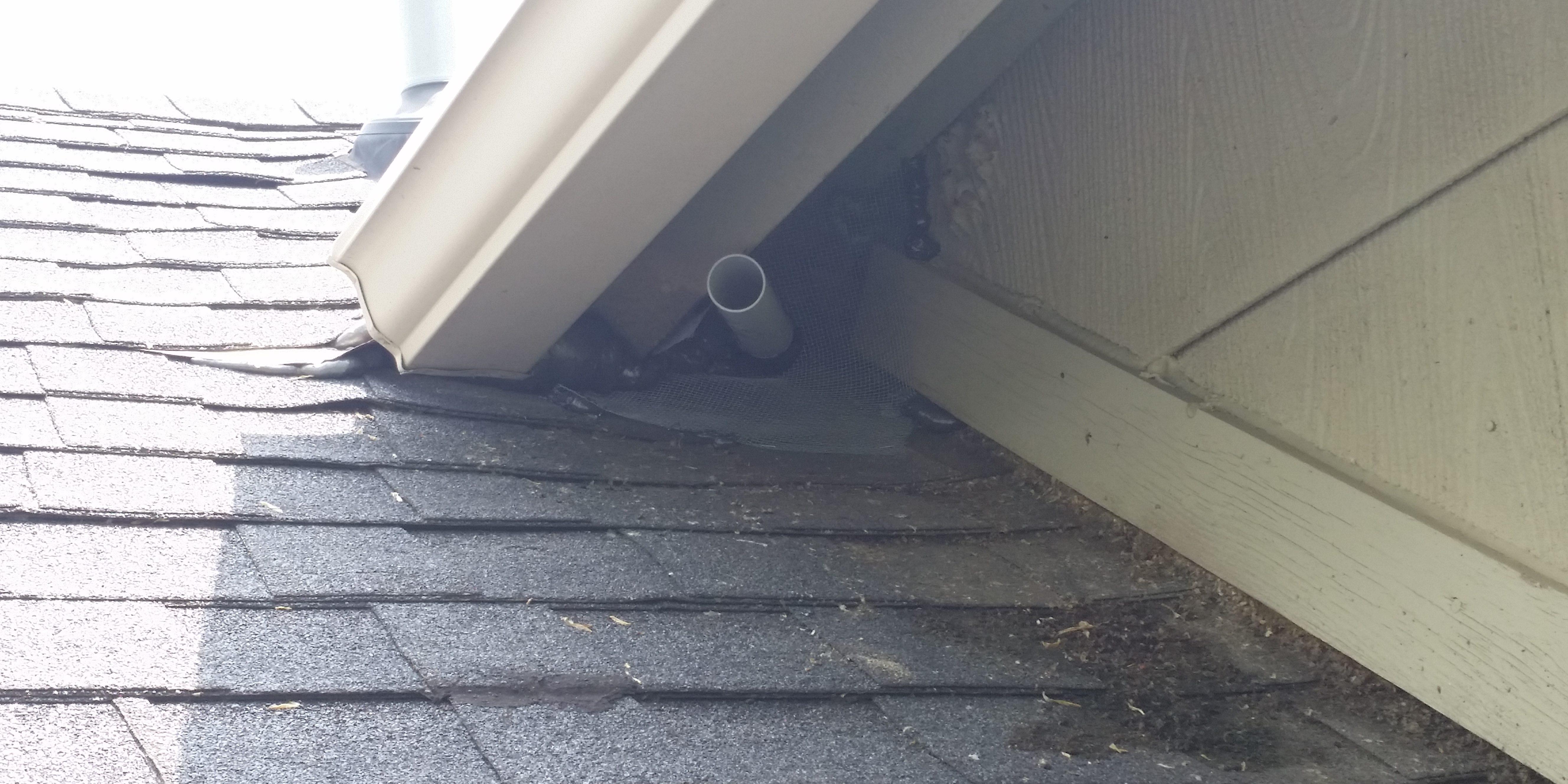 Bats Entering Through Roof Gap