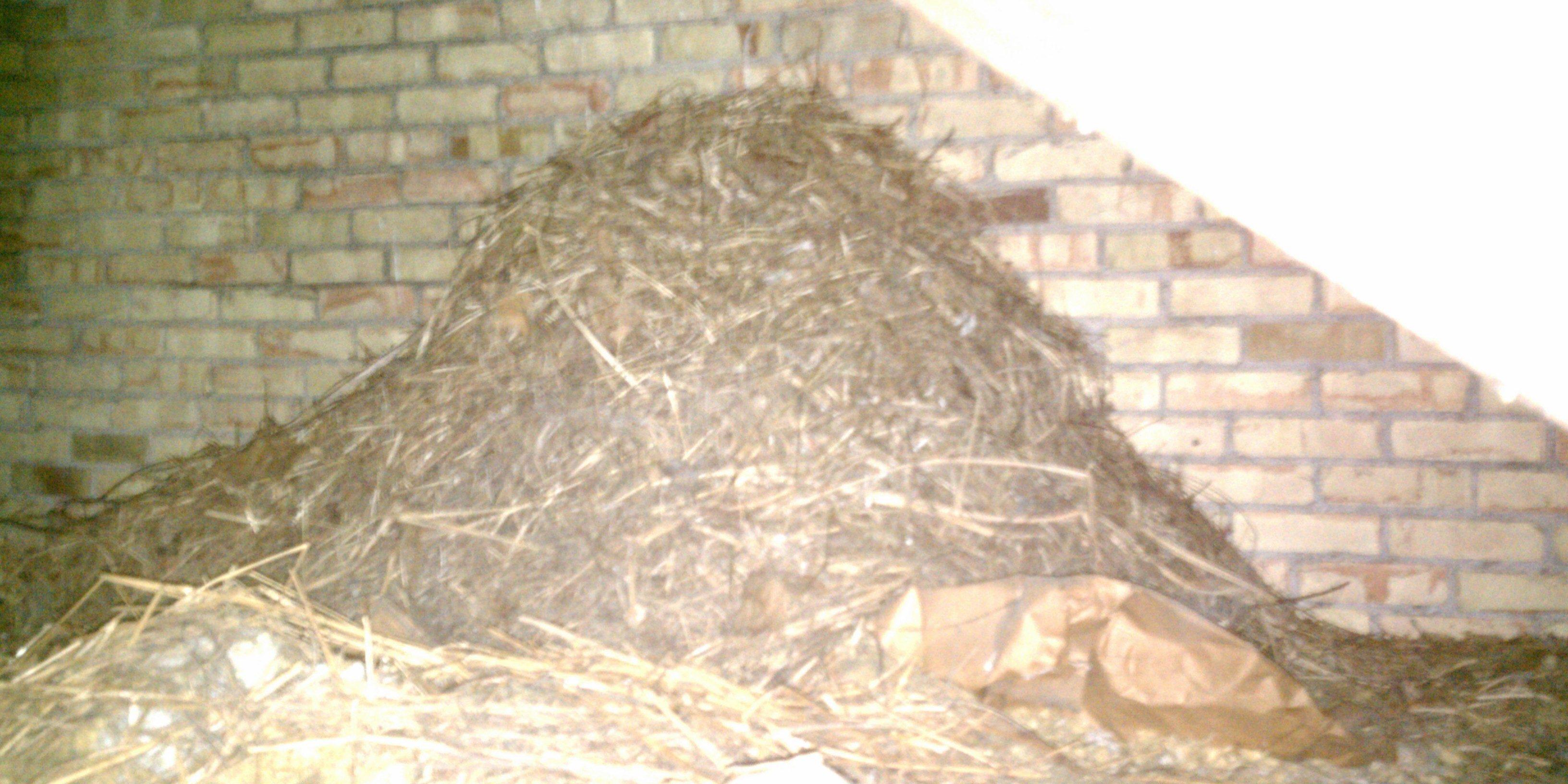 Michigan Bird Control Nest Clean up
