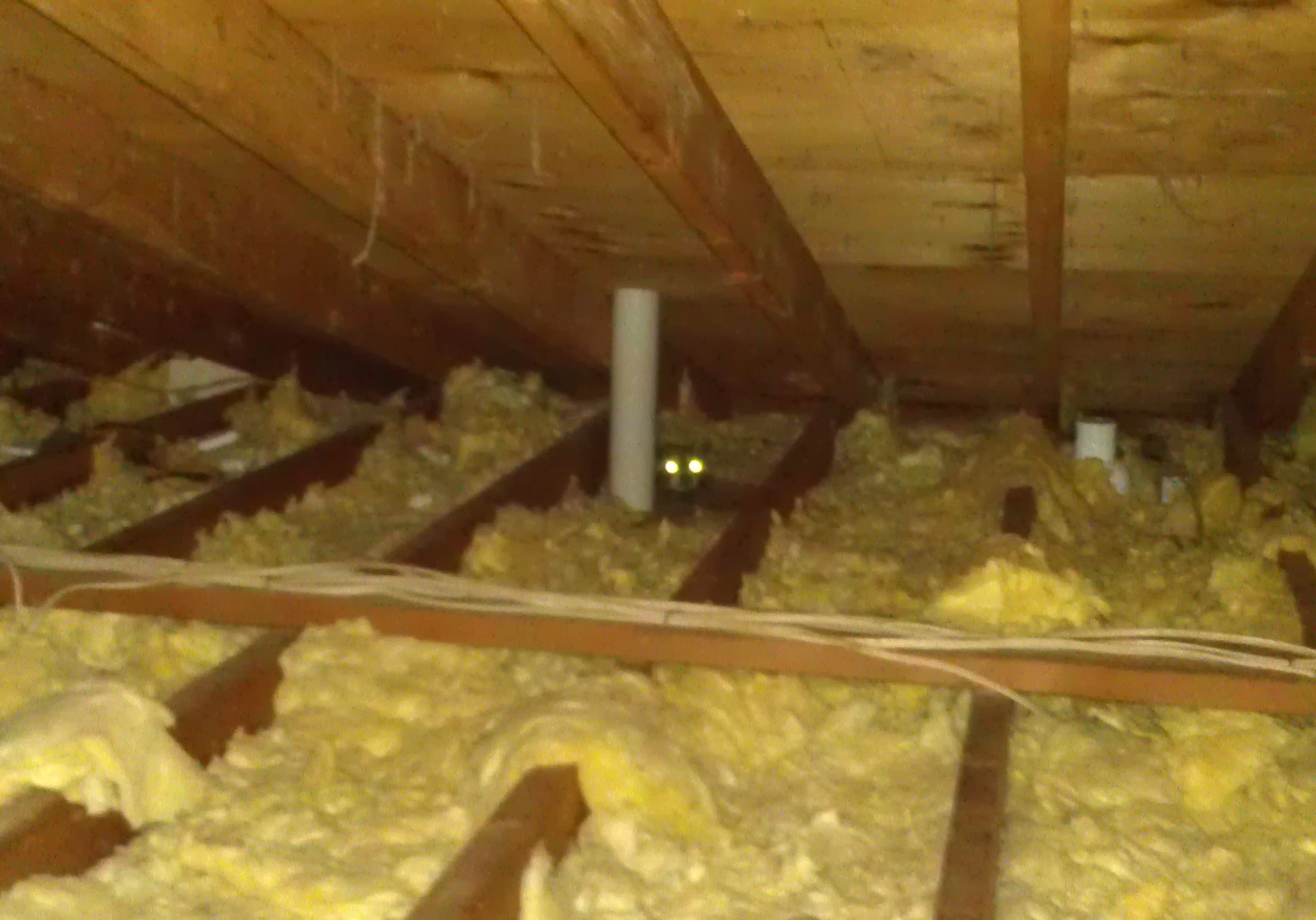 Michigan Raccoon Control